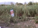 NORTH MARINE DRIVE LOT  ID 1867 OFFER ACCEPTED, St. Thomas, Jamaica - Residential lot for Sale