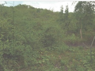 Commercial/farm land  For Sale in Halse Hall May Pen, Clarendon, Jamaica