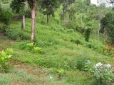 Lemon Ridge Linstead St  catherine, St. Catherine, Jamaica - Commercial/farm land  for Sale