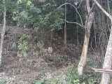 LOT 18 BONHAM SPRING, St. Ann, Jamaica - Residential lot for Sale