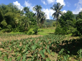 Toms Hope, Portland, Jamaica - Commercial/farm land  for Sale