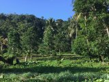 Nonsuch, Portland, Jamaica - Commercial/farm land  for Sale