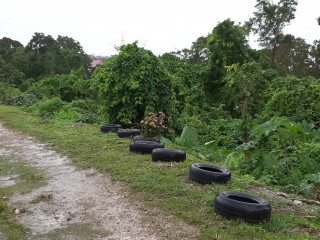 Residential lot For Sale in Mango Valley, St. Mary, Jamaica