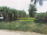 TOWN HEAD, Westmoreland, Jamaica - Commercial/farm land  for Sale