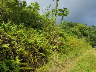 Commercial/farm land  For Sale in Carton Estate Off road leading from Claremont to Lime Hall, St. Ann, Jamaica