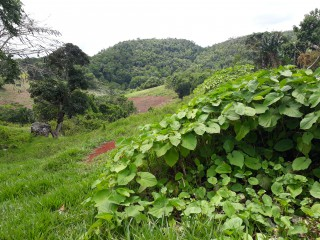 Residential lot For Sale in Lumsden, St. Ann, Jamaica