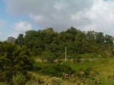 Malvern, St. Elizabeth, Jamaica - Residential lot for Sale