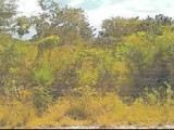 Fullerswood, St. Elizabeth, Jamaica - Residential lot for Sale