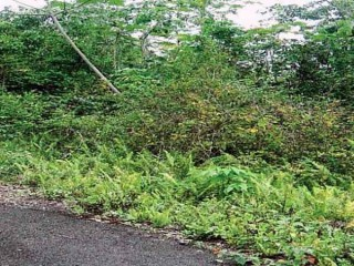 Residential lot For Sale in Coopers Hill Kingston 19, Kingston / St. Andrew, Jamaica