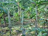 Residential lot For Sale in Bamboo Walk, St. Mary, Jamaica
