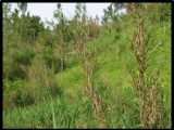 Commercial/farm land  For Sale in New Milns, Clarendon, Jamaica