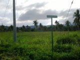 WhiteHall  Estate, St. Mary, Jamaica - Residential lot for Sale