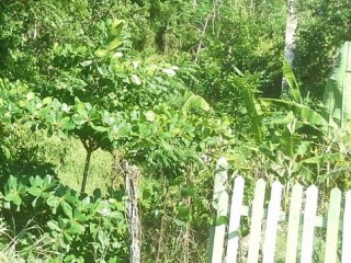 Residential lot For Sale in Tripoli, St. Ann, Jamaica