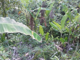 Residential lot For Sale in PORT MORANT, St. Thomas, Jamaica