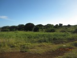 Treasure Beach, St. Elizabeth, Jamaica - Residential lot for Sale
