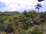Donnington Castle, St. Mary, Jamaica - Commercial/farm land  for Sale